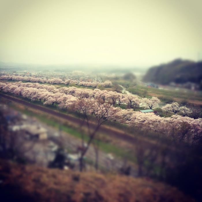 SASAYAMA_BLOG_OHGAWARA.jpg